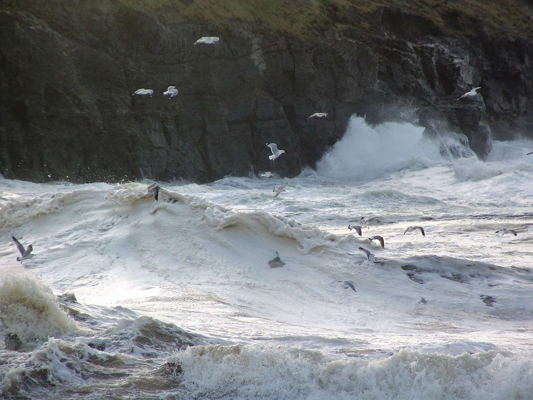 Sea Gulls, White Foam Waves crashing on the cliffs of Donegal Coastline