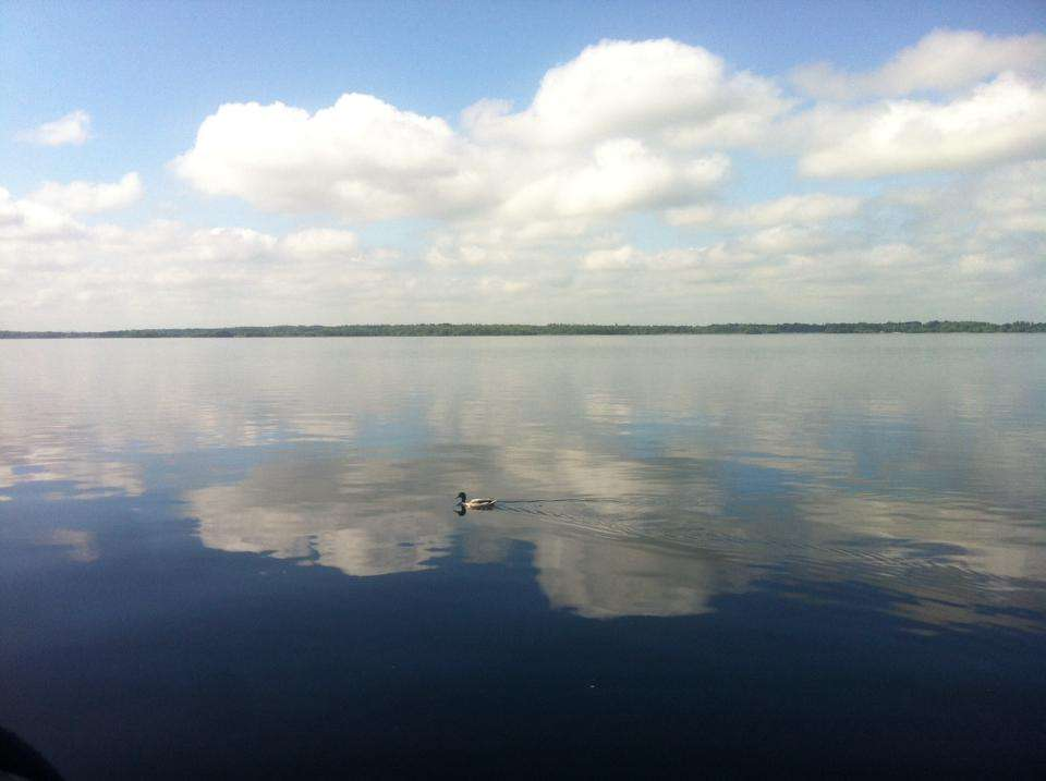 Blue sky and white cloud reflected on still lake. Single Malard duck in center of lake.