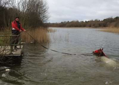 Mincéir Michael Carthy swimming a horse in Kellyville Lake county Laois