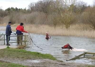 Men swimming horses in Kellyville Lake, county Laois