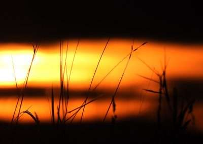 Blurred sunset behind blades of grass