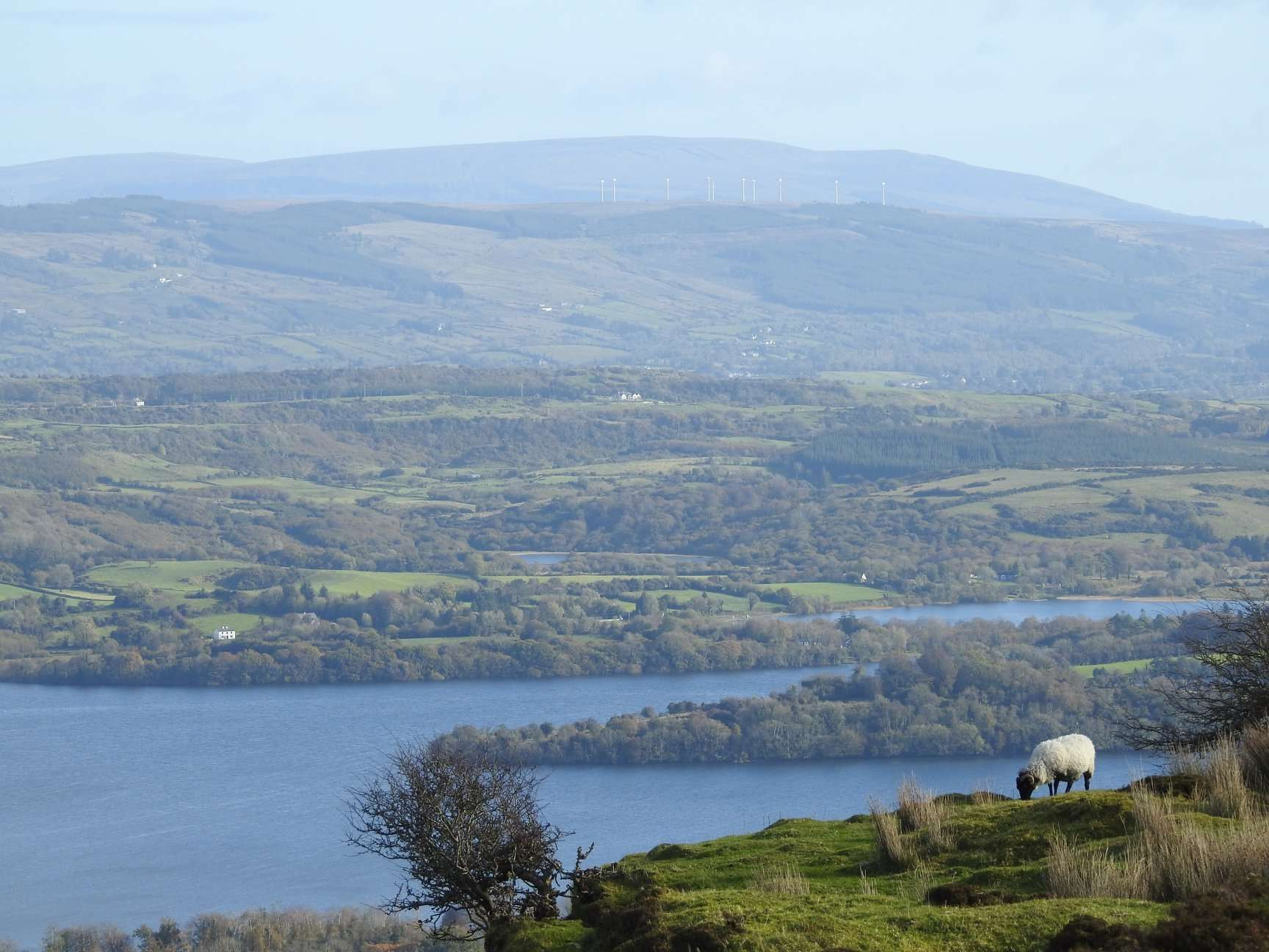 View over Sligo lakes from high. Sheep in foreground